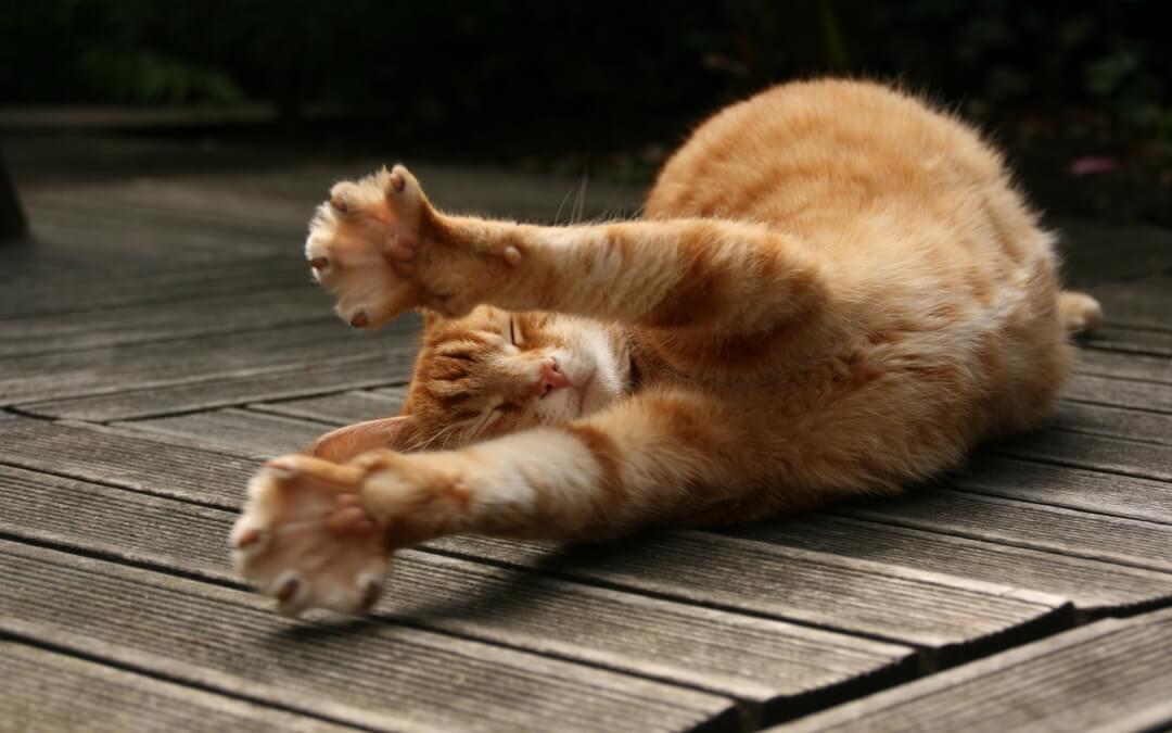 Pilates – Stretching